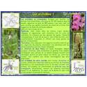 AA - Orchidées - Introduction