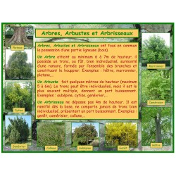 AA - Arbres, arbustes et arbrisseaux, introduction
