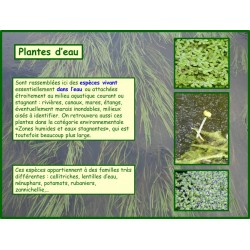 A - Plantes d'eau - Introduction