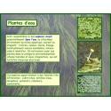 AA- Plantes d'eau - Introduction