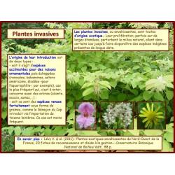 AA - Introduction aux plantes invasives