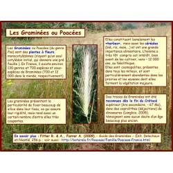 AA - Introduction aux graminées