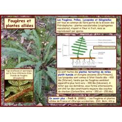 AA - Introduction aux fougères et plantes alliées