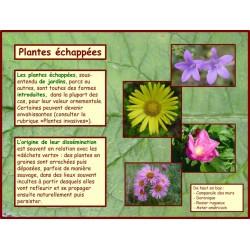 AA - Plantes échappées