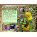 AA - Plantes et monde animal