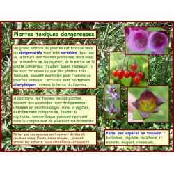 AA - Plantes toxiques