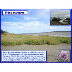 AA - Flore maritime