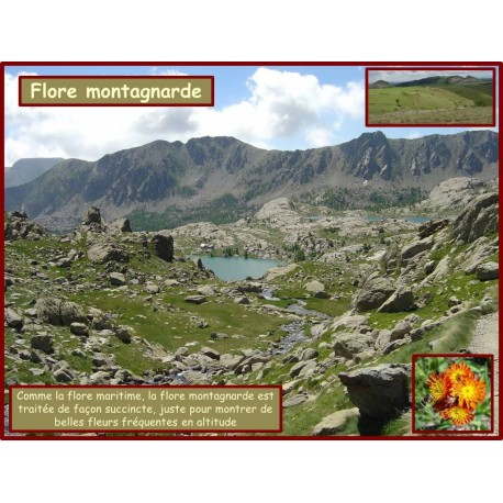 AA - Flore montagnarde