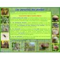 AA - Introduction aux parasites des plantes animaux et mycologiques