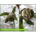 Galle en Artichaut du Saule - Rabdophaga strobiloides - 899