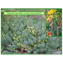 Euphorbe petit cyprès - Euphorbia cyparissias - 122