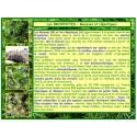 AA - Mousses, hépatiques, bryophytes, introduction