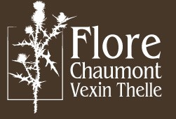 Flore Chaumont Vexin Thelle