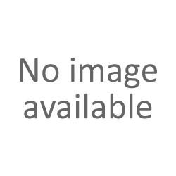 chardon fausse-acanthe-Carduus acanthoides-877